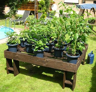 hochbeet bauanleitung f r chili pflanzen pepperworld