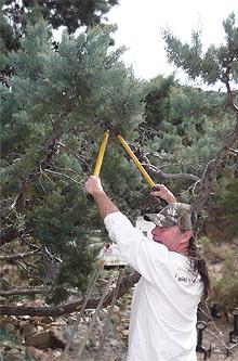 Reed schneidet Zweige zum Räuchern