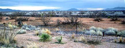 Sonora-Wüste (nördliches Mexiko)