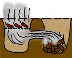 Diagramm: Chipotle-Herstellung