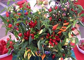 Chili-Bouquet