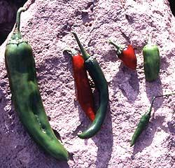 Chile varieties