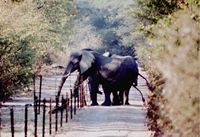 Aniti-Elefanten-Chili-Zäune