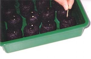 Eine Anzuchtbox von Jiffy ist für den Chili Anbau gut geeignet.