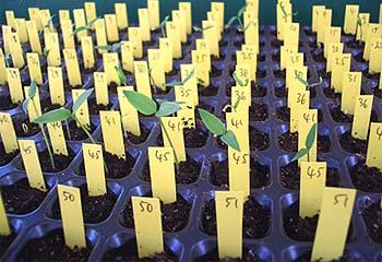 Chilis Anbauen - Tipps Von Der Aussaat Bis Zum Auspflanzen! Blattsalat Pflanzen Pflege Tipps Garten